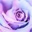 Perfil emillyvitoria011207