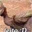 Perfil Patinho1180