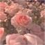 Perfil ImLoveFlower_Pink