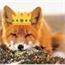 Perfil FoxyMPrince