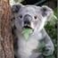 Perfil Yummy_Koala