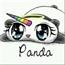 Perfil Pandi_Cornia