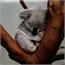 Perfil Miss_Koala