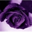 Perfil violet33