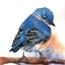 Perfil BlueBird510