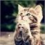 Perfil cute_cat