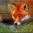 Perfil Fox_690