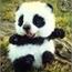 Perfil Panda_wan