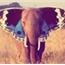 Perfil Elefantes_Uivam