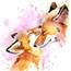 Perfil foxbr