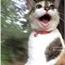 Perfil gato_revoltado