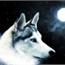 Perfil Kiara-Wolf
