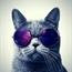 Perfil Happy-Cat