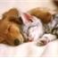 Perfil Catsanddogs