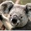 Perfil KoalaFofitao