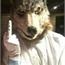 Perfil Lobo-Sorveteiro