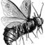 Perfil lordoftheflies