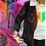 Perfil Luu_Horan