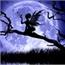 Perfil Night_Fairy