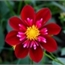 Perfil monamie_cherry