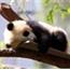 Perfil Panda_B3ar