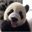 Perfil PandaGunner