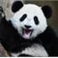 Perfil PandaHistorias