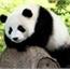 Perfil PandaNeko-Kawai