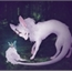 Perfil Pequena-ratinha