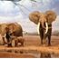 Perfil ElephantMemory