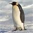 Perfil PinguimLoko