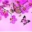 Perfil rosaserra