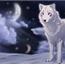 Perfil wolf-white