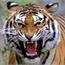 Perfil tigergirl12