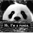 Perfil Vivi_Panda