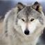 Perfil Wolf678