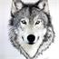 Perfil Wolf_Lone