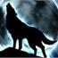 Perfil Wolf_Spirit
