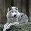 Perfil Wolfgirl05