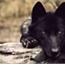 Perfil The-Kind-Wolf