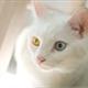 ~_KittyKat_