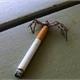 ~Smoking_Spider