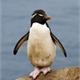~Pinguimalandro