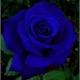 ~Blue_Lunnie