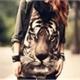 ~Tigre_negro