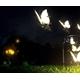 ~Butterfly_Chan