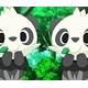 ~Duas_Pandas