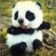 ~Panda_wan
