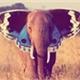 ~Elefantes_Uivam