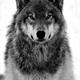 ~gah-wolf